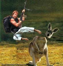 Chuck Norris kangaroo