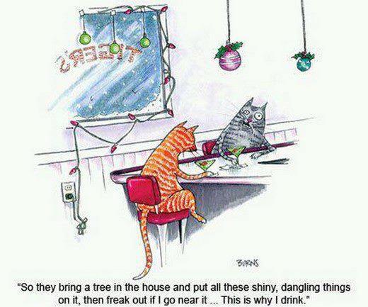 Cats bar