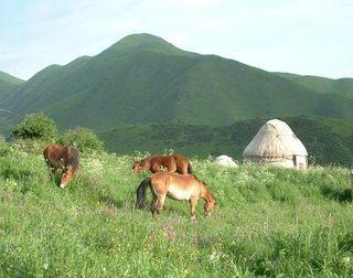 Kaz horse