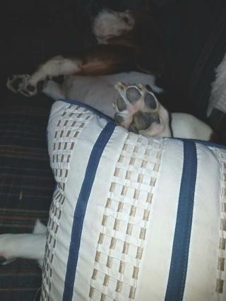 Lola paw