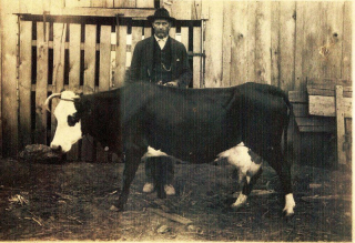 Grandpa Hasty and cow